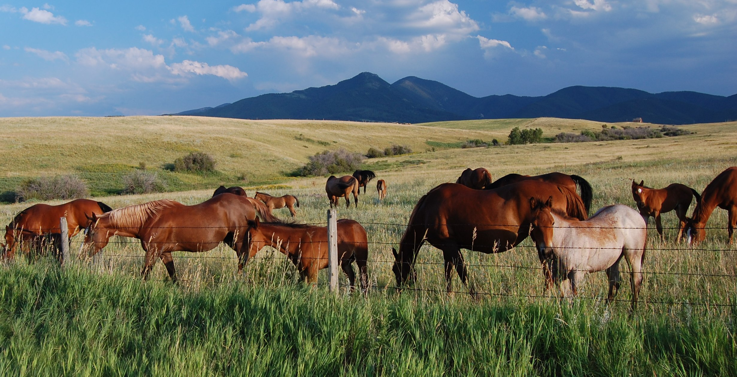 Bozeman Montana Horse Properties For Sale