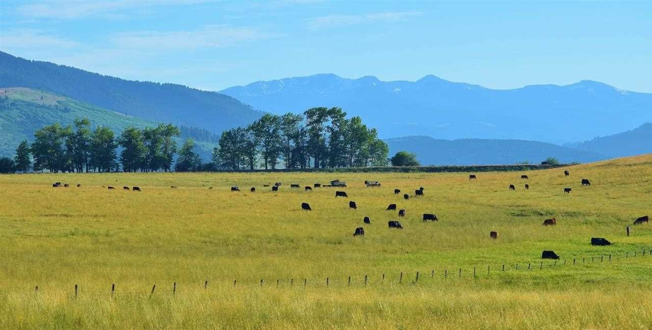 Montana Ranches For Sale Taunya Fagan