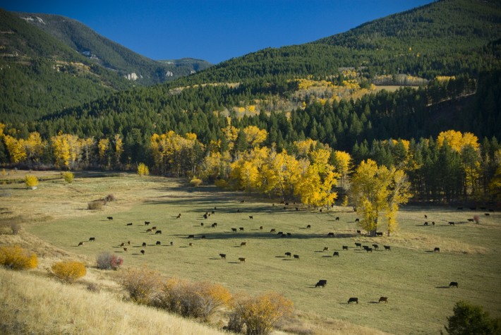 Sw montana ranches for sale listings farm ranchettes for Cost to build a house in bozeman mt